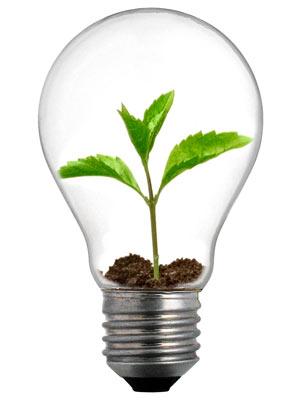 lightbulb-plant